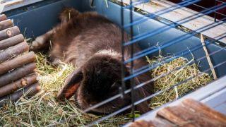 best indoor rabbit hutches