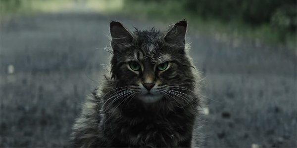 The Cat From Pet Sematary Has Died For Real - CINEMABLEND