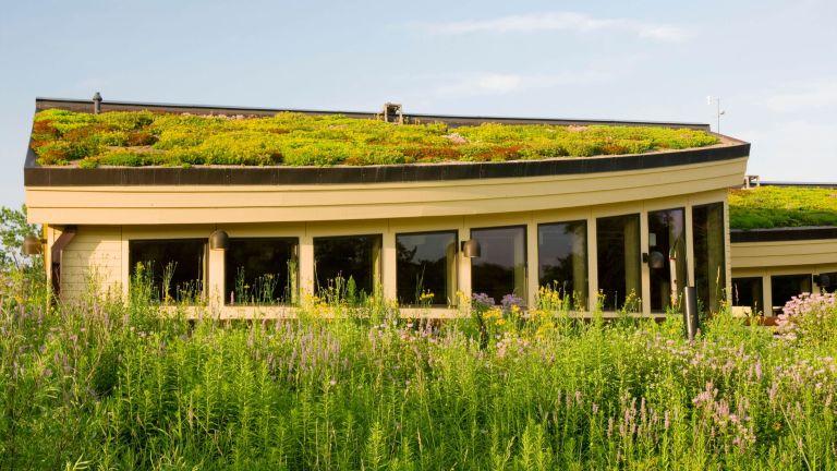 green roof idea on modern building