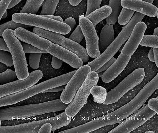 Human Gut Loaded with More Bacteria Than Thought   Live Science