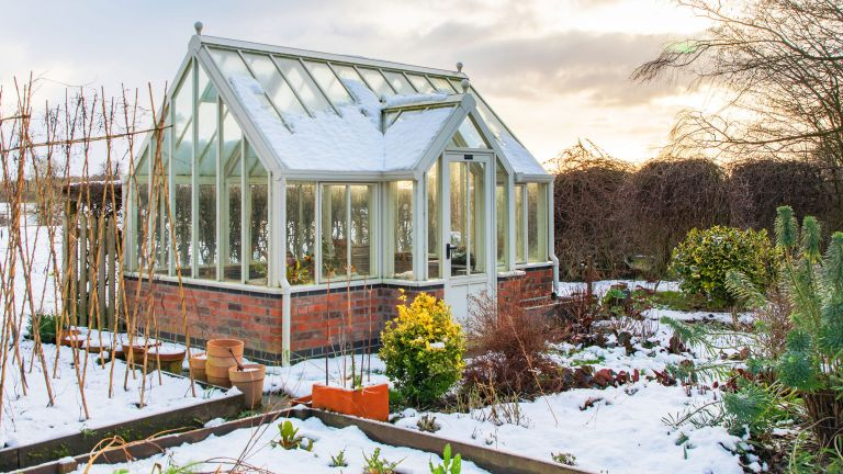 what to grow in your greenhouse in winter