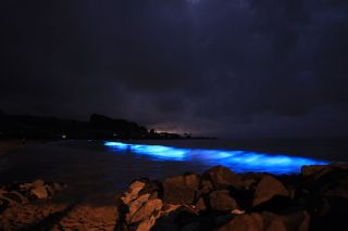 Bioluminescence is a naturally occurring phenomenon. Tiny organisms in the algae bloom emit light as a defense mechanism.