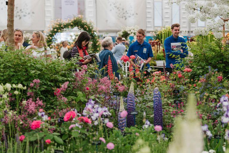 chelsea flower show grand pavilion