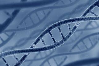 Model of DNA.