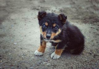 A stray puppy