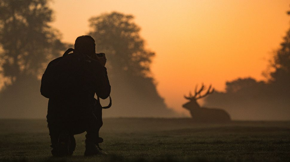 The best camera for wildlife photography in 2019