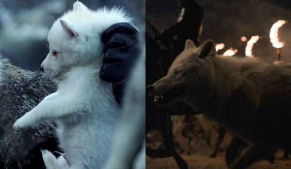 Game of Thrones Ghost Then and Now