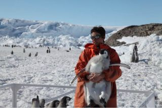 Emperor penguin chick in Antarctica.