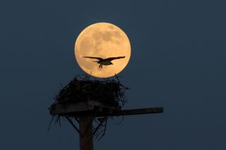 Photographer Medford Canby of Annapolis, Maryland, captured this amazing supermoon photo on June 23, 2013 as the full moon rose over a beach at Chesapeake Bay. There will be three supermoons in 2014, one each in July, August and September.