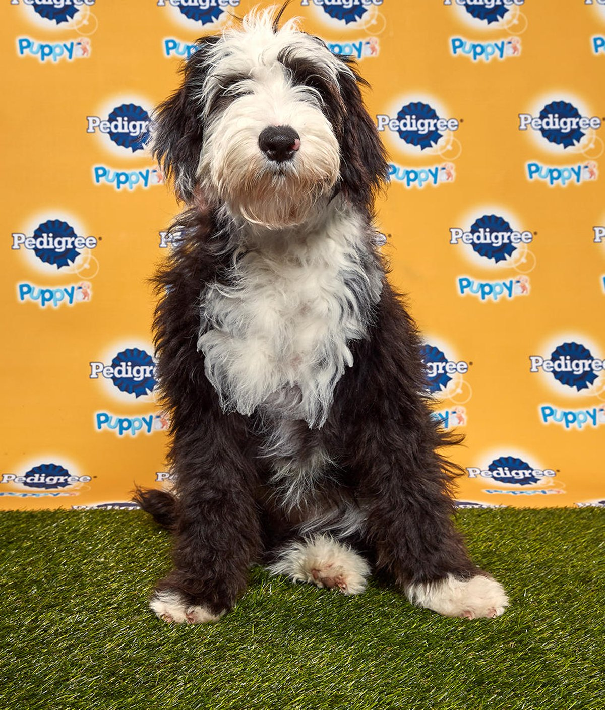 Candy Puppy Bowl 2020 Puppy Bowl XVI Animal Planet photo