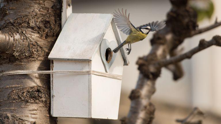 birds in gardens