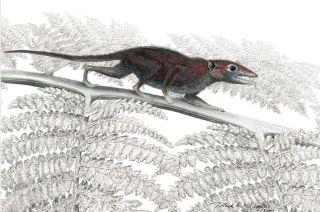Mammals, placental mammals, mammalian evolution, oldest mammal, Juramaia sinensi, shrew-like ancestor, true mammal,