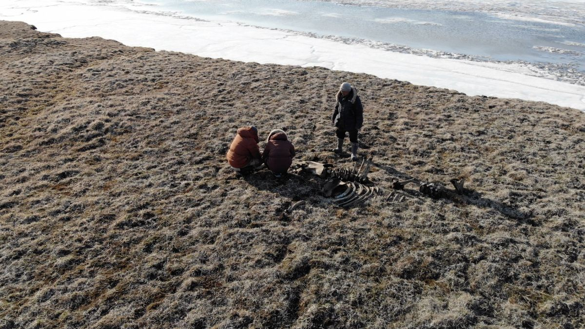 Russian expedition finds evidence of northernmost Stone Age hunters above the Arctic Circle