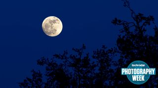 A full moon rising over a forest