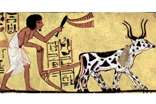 animals, science in policy and society, history, Egypt