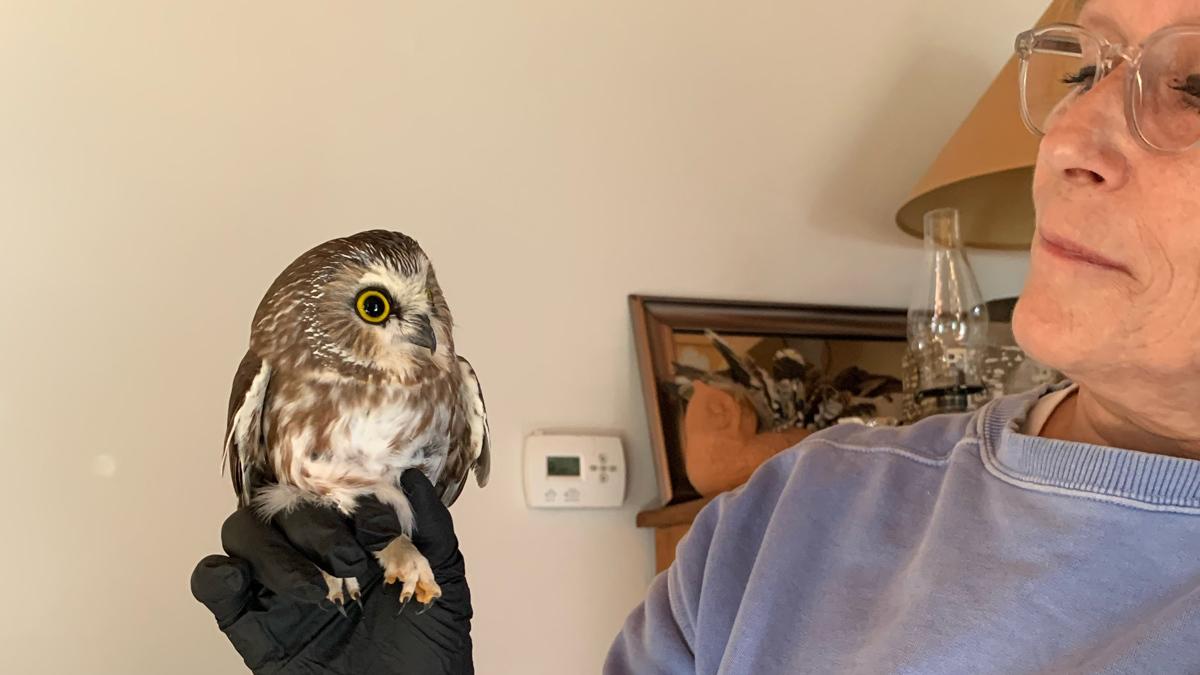 Ellen Kalish, director and founder of Ravensbeard Wildlife Center, holds Rockefeller, who got a clean bill a health from the vet.