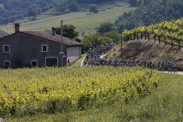 22 May 2013 96th Giro d'Italia Stage 17 : Caravaggio - Vicenza Peloton among vineyards Photo : Yuzuru SUNADA