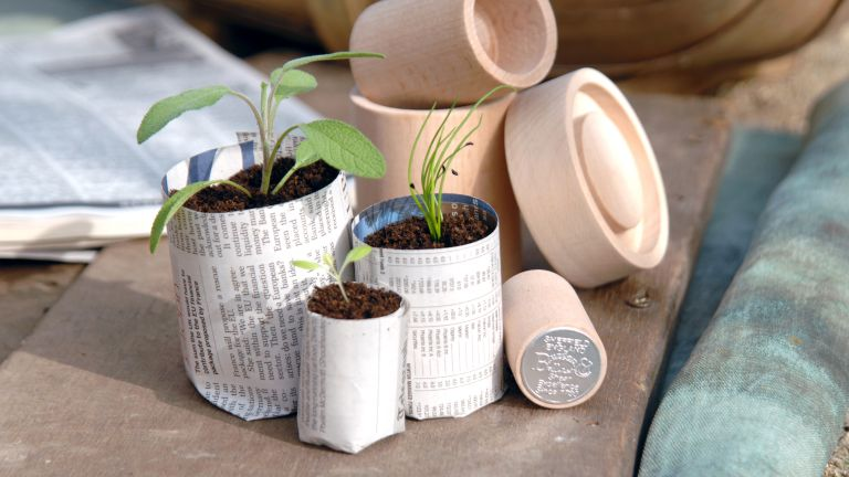 budget garden ideas using paper seed holders