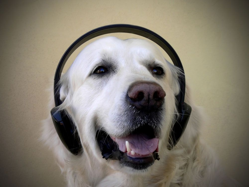 What Type Of Music Do Pets Like Live Science