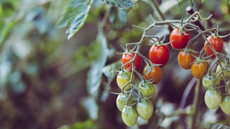 Monty Don's June vegetable garden tips
