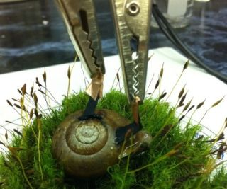 Cyborg Snail