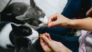 Two cats being fed by hand