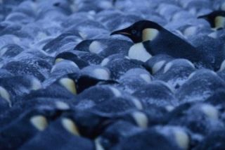 penguin-huddle-02