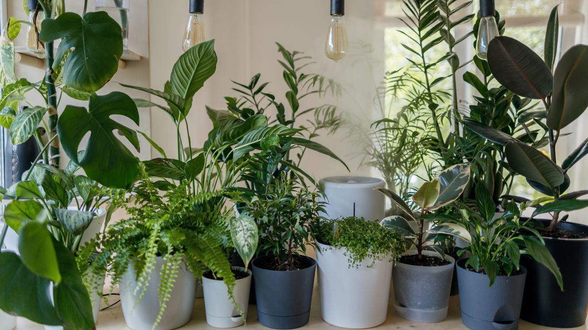 When to repot plants, and how to do it, according to the experts