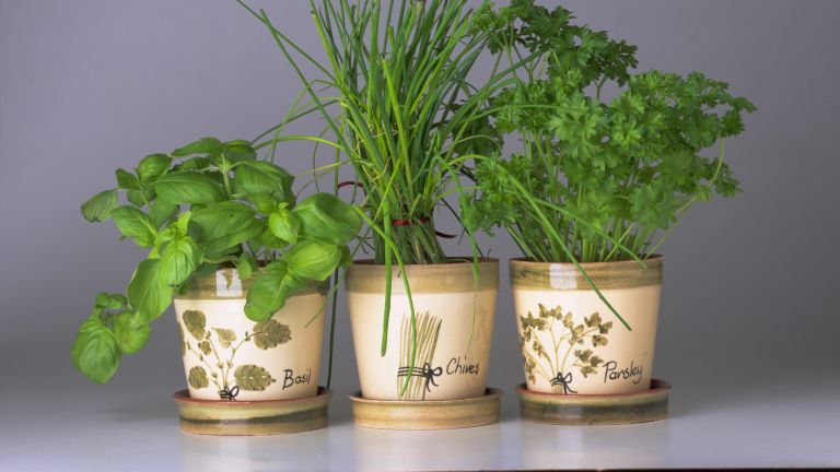 best herbs to grow at home include basil, chives and parsley