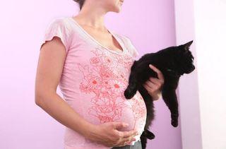 pregnant-woman-cat-11101602