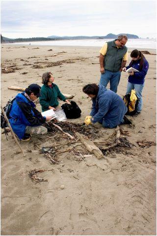 citizen-science, COASST, coastal ecology