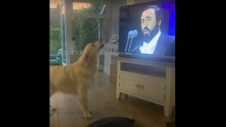 Dog singing opera to Pavarotti in front of TV