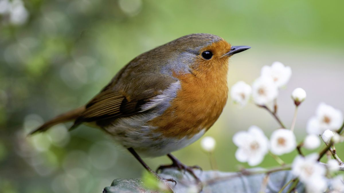 Garden wildlife needs help in spring, says Monty Don. Here's the lowdown on what you can do