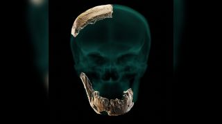 The remains of this hominin suggest that compared with modern humans, it had a different skull structure, no chin and very large teeth.