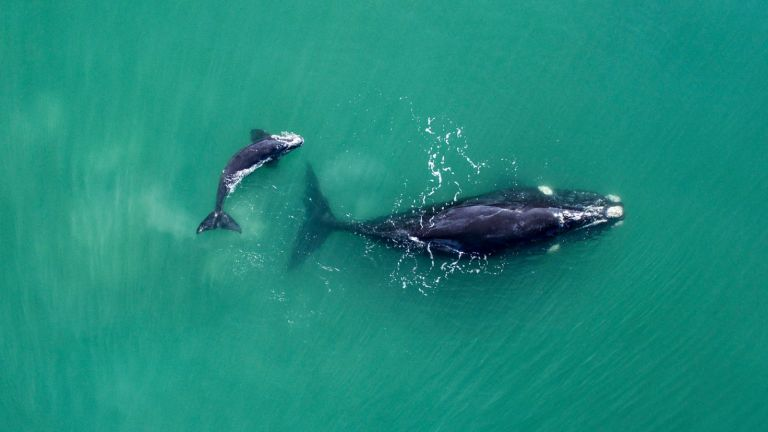 whales in the sea