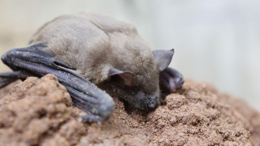 Hundreds of animal species could harbor novel coronaviruses - Livescience.com