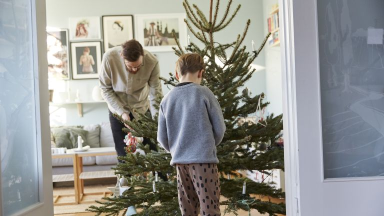 uses for your Christmas tree in the garden