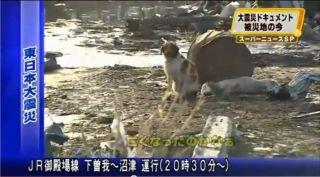 Dog sticks by injured fellow canine in Sendai, Japan.