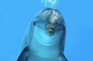 Dolphin looking at camera
