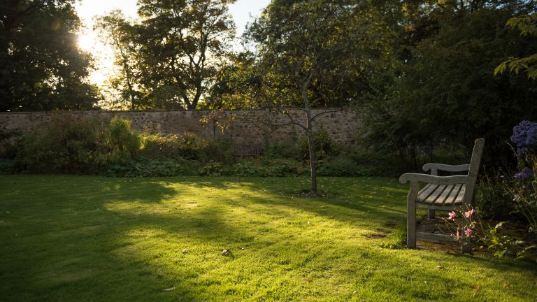 View of an empty wooden bench in the sun with lawn, trees and flowers