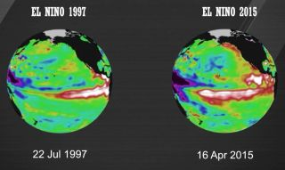 A comparison of sea surface temperatures in the equatorial Pacific in 1997 (a strong El Nino year) and 2015.