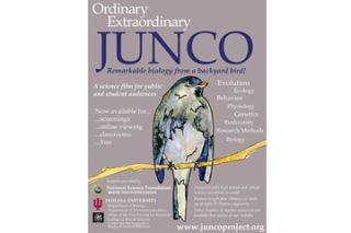 The Ordinary Extraordinary Junco project offers educational resources for use by teachers and students