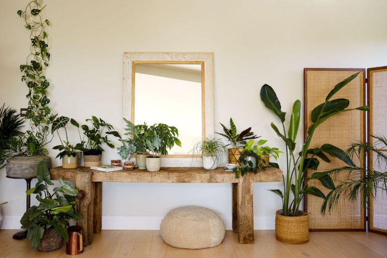 House plants on display in a modern living room