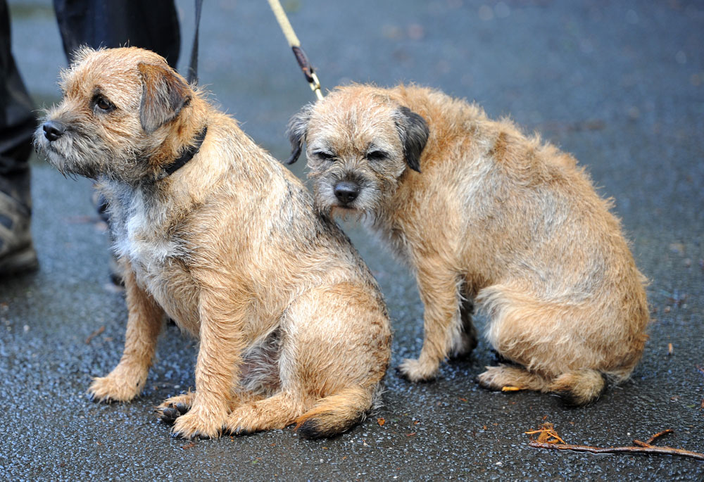 Soggy terriers, Tour of Britain 2011, stage two (cancelled)