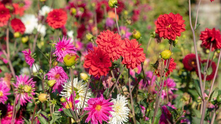 multi-coloured flowerbed