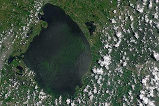 toxic-algal bloom