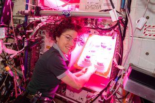 NASA astronaut Christina Koch began the Veg-PONDS-02 experiment in the International Space Station's Veggie system on April 25, 2019.