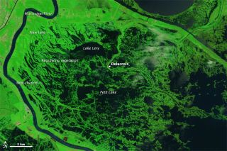 hurricane katrina, katrina, new orleans, louisiana, swamps, marshes, gulf of mexico, delacriox