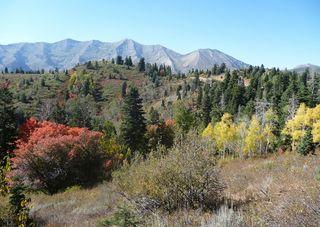 utah fall foliage colors