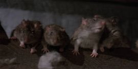 Adapting Stephen King's Graveyard Shift: The 1990 Rat Fest Is The Textbook Definition Of A 'Bad Stephen King Movie'
